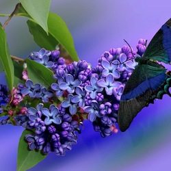 Jigsaw puzzle: Lilac and butterfly
