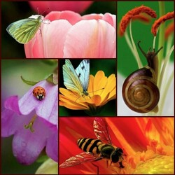 Jigsaw puzzle: Flora and fauna