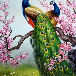 Jigsaw puzzle: Spring peacocks