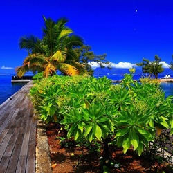 Jigsaw puzzle: Pier in the tropics
