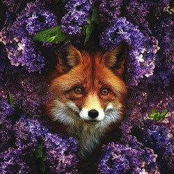 Jigsaw puzzle: Fox in lilac