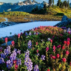 Jigsaw puzzle: Mount Rainier National Park