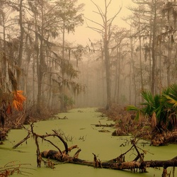Jigsaw puzzle: Manchak swamps in Louisiana