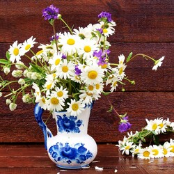 Jigsaw puzzle: Favorite chamomile flowers