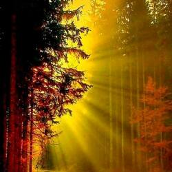 Jigsaw puzzle: The sun came into the forest