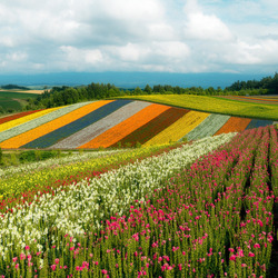 Jigsaw puzzle: Colorful fields