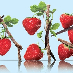Jigsaw puzzle: Strawberry