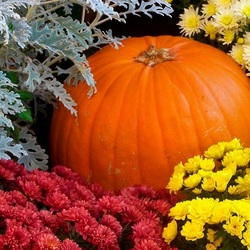 Jigsaw puzzle: Pumpkin and chrysanthemums