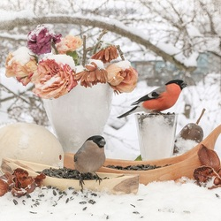 Jigsaw puzzle: Bullfinches have arrived