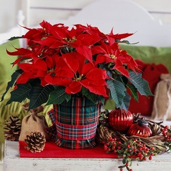 Jigsaw puzzle: Poinsettia bouquet