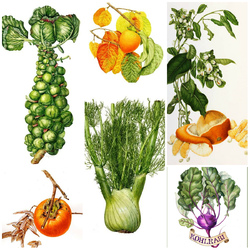 Jigsaw puzzle: Fruit and vegetable fantasy