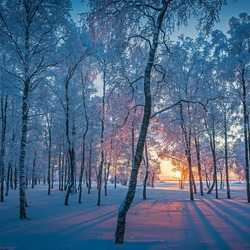 Jigsaw puzzle: Morning in winter