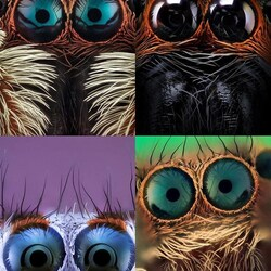 Jigsaw puzzle: Spider eyes