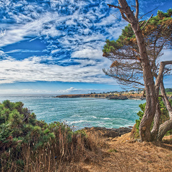 Jigsaw puzzle: California coast