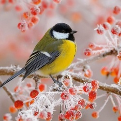 Jigsaw puzzle: Birds in winter