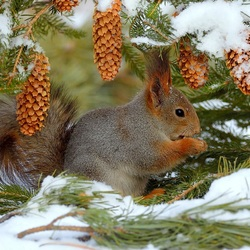 Jigsaw puzzle: How squirrels winter