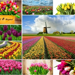 Jigsaw puzzle: Sea of tulips