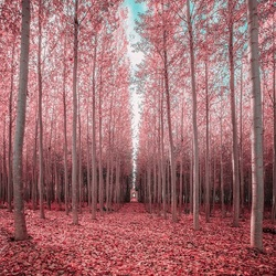Jigsaw puzzle: Pink forest