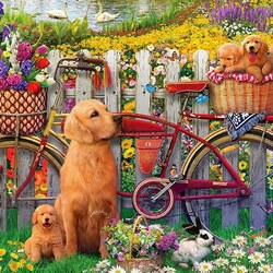 Jigsaw puzzle: Cute dogs