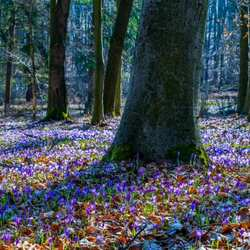 Jigsaw puzzle: In the spring forest