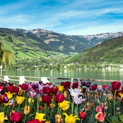 Jigsaw puzzle: Spring landscape