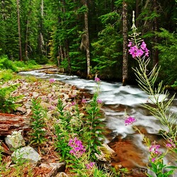 Jigsaw puzzle: Forest stream