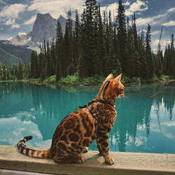 Jigsaw puzzle: Sookie the Cat Traveler