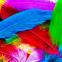 Jigsaw puzzle: Bright feathers