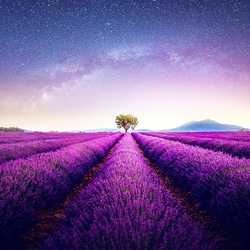 Jigsaw puzzle: Lavender field
