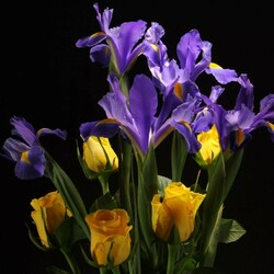 Jigsaw puzzle: Irises and roses