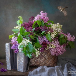 Jigsaw puzzle: Lilac and accordion