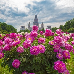 Jigsaw puzzle: Botanical Garden of Moscow State University
