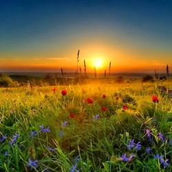 Jigsaw puzzle: Sunset in the meadow
