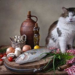 Jigsaw puzzle: Cat and still life