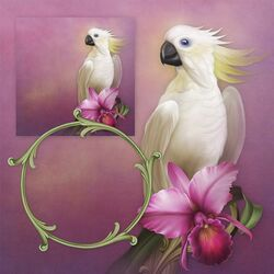 Jigsaw puzzle: White parrot