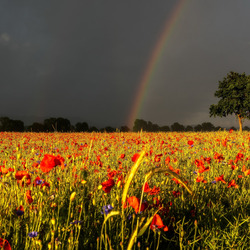 Jigsaw puzzle: Rainbow over the field