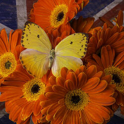 Jigsaw puzzle: Flowers and butterfly
