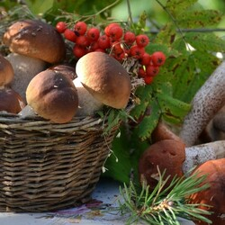 Jigsaw puzzle: Mushrooms and berries