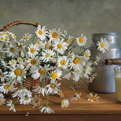 Jigsaw puzzle: Chamomile and milk