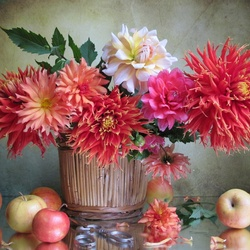 Jigsaw puzzle: We play dahlias