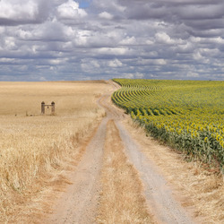 Jigsaw puzzle: Road in the fields
