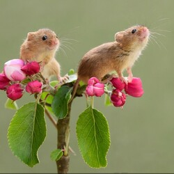 Jigsaw puzzle: Two mice