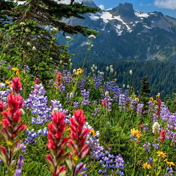 Jigsaw puzzle: Flowers in the mountains