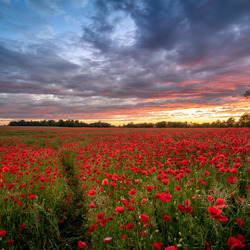 Jigsaw puzzle: Sunset and poppies