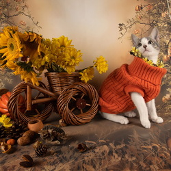 Jigsaw puzzle: Autumn kitten