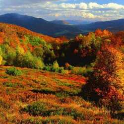 Jigsaw puzzle: Bright autumn in the Carpathians