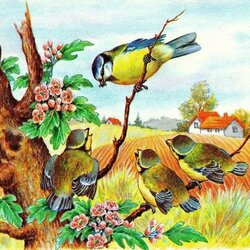 Jigsaw puzzle: Titmouse