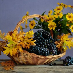Jigsaw puzzle: Flowers and grapes