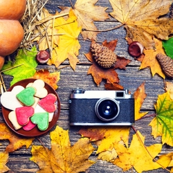 Jigsaw puzzle: Autumn photo sessions