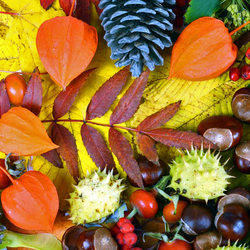 Jigsaw puzzle: Leaves, cones and chestnuts